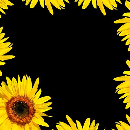 Sunflowers and petals forming an abstract frame, over black background. photo