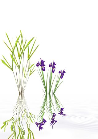 Zen garden abstract with purple iris flowers and bamboo leaf grass with reflection in rippled grey water, over white background. photo
