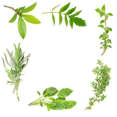 Herb leaf border of bay, valerian, oregano, lavender,  sage and thyme, over white background.  Stock Photo