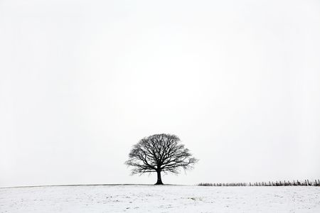 Oak tree in a field of snow in winter against a white sky background. photo