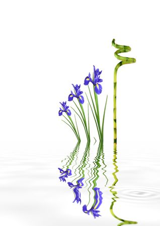 irises: Zen abstract of lucky bamboo leaf grass and blue iris flowers and reflection in rippled  grey water, over white background.