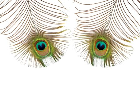Two iridescent peacock feathers featuring the eyes, over white background. photo