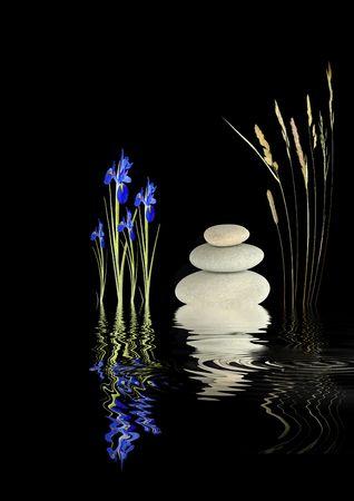 野草: 禅のアイリスの花と抽象的な庭、野生草の茎し、灰色スパ石の反射の完璧なバランスで波状水は、黒い背景の上。
