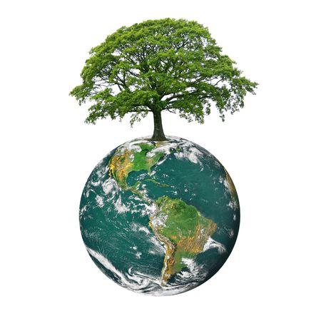 arbol de problemas: El planeta tierra con el norte y los continentes de Am�rica del Sur, con un roble de hojas, en verano en la posici�n del norte del planeta, sobre fondo blanco. Foto de archivo