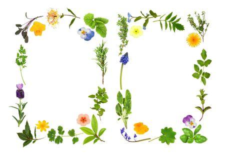 medicinal plants: Hierba de hojas y flores selecci�n formando dos fronteras abstractas, sobre fondo blanco.