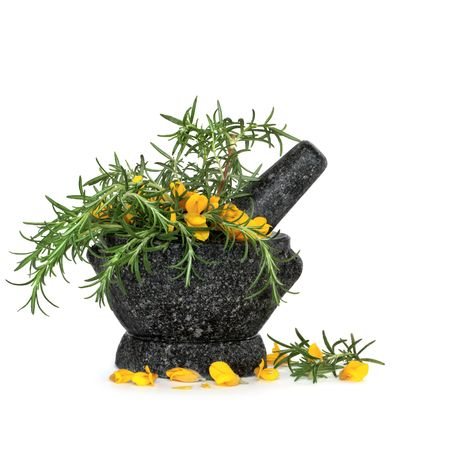 Rosemary herb leaf sprigs and wild gorse flowers in a granite mortar with pestle, over white background. Stock Photo - 5534315