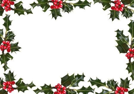 ilex aquifolium holly: Holly leaf sprigs with red berries forming an abstract border over white background. Stock Photo