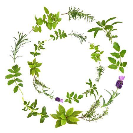 medicinal plants: Hierbas medicinales y culinarias en un dise�o circular, sobre fondo blanco.