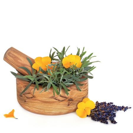Lavender herb leaf and flower sprigs and viola flowers with an olive wood mortar with pestle, isolated over white background. Stock Photo - 5566329