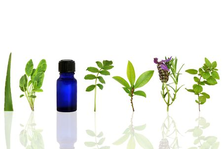 Herb leaf and flower selection with an aromatherapy essential oil glass bottle, over white background with reflection. Stock Photo - 5596828