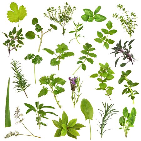 balm: Large herb leaf selection in abstract design over white background.