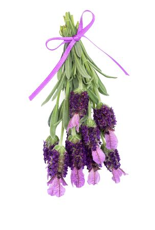 Lavender herb flowers and leaf sprigs tied with a lilac ribbon, over white background. Stock Photo - 5596822