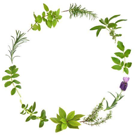 tomillo: Hierbas medicinales y culinarias en un dise�o circular abstracta, sobre fondo blanco. Foto de archivo