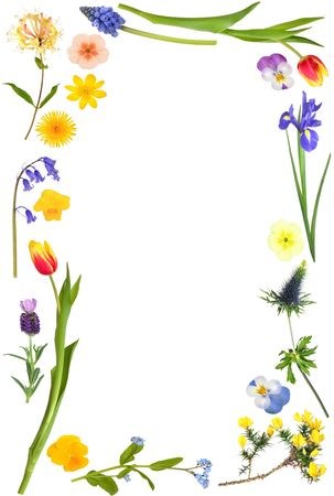 hyacinth: Large flower selection forming an abstract border over white background. Stock Photo
