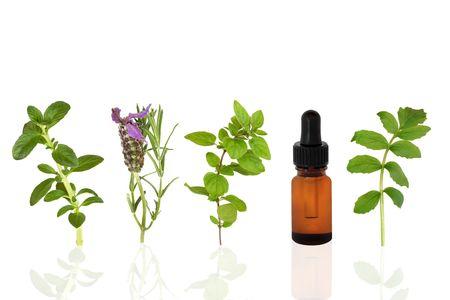 valerian: Herb selezione foglia di menta, lavanda, origano e la valeriana con aromaterapia bottiglia di olio essenziale di vetro contagocce, su sfondo bianco.