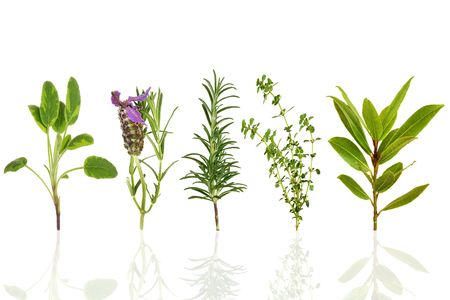 Sage, lavender, rosemary,  thyme and bay leaf herbs, over white background with reflection. Stock Photo - 5683137