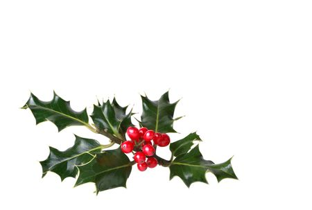ilex aquifolium holly: Holly leaf sprig with red berries isolated over white background. Stock Photo