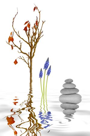 Zen garden abstract of spa stones in perfect balance a beech tree branch, grape hyacinth flowers, with reflection in rippled grey water, over white background.