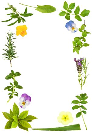 medicinal herb: Herb leaf selection with lavender, viola and primrose spring flowers forming an abstract border, over white background. Stock Photo