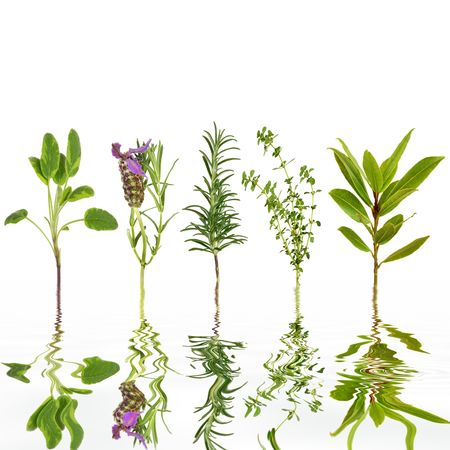 Sage, lavender, rosemary, thyme and bay leaf herbs, with reflection in rippled grey water, over white background. Stock Photo - 5766220