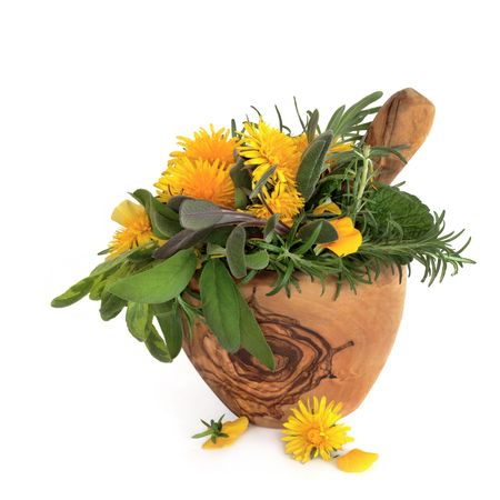 Wild dandelion and gorse flowers with sage, rosemary and lemon balm herb leaves in an olive wood mortar with pestle, over white background. photo