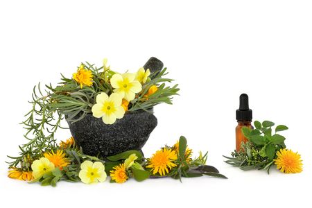 Wild flower and herb leaf selection  with a granite mortar with pestle and aromatherapy essential oil glass bottle, over white background. Stock Photo - 5766208
