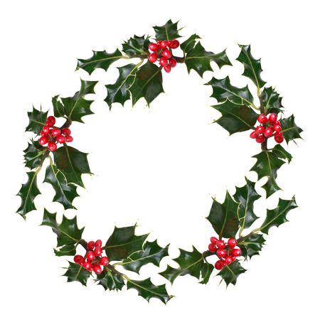 ilex aquifolium holly: Holly leaf sprigs with red berries forming a circular wreath, over white background.