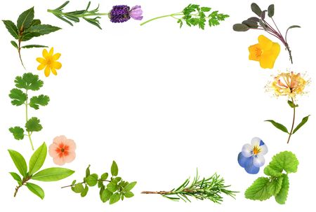 medicinal: Flower and herb leaf border, over white background. Stock Photo