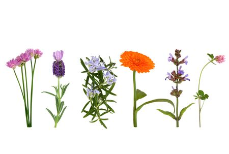 Chives, lavender, rosemary, marigold, sage and clover herbs in flower in a line, over white background.