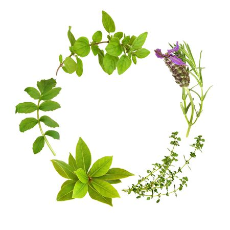 Herb leaf garland of lavender, bay, oregano, lemon thyme and valerian, over white background. Stock Photo - 5866688