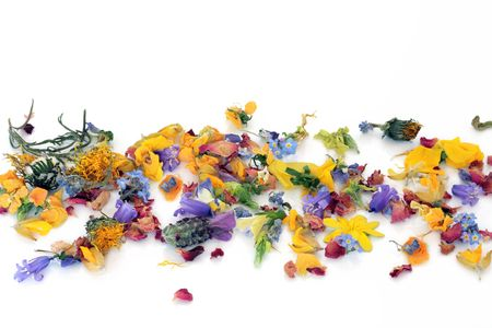 Spring fresh and dried  flowers and  herbs scattered in an abstract pattern, over white background.
