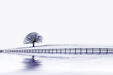 climatic: Abstract of an oak tree in a field of snow in winter with an old wooden fence and reflection, with blue tint.