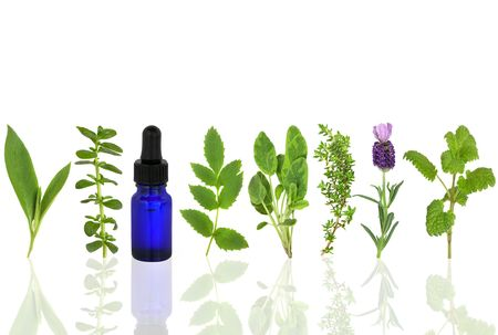 homeopathic:  Herb leaf selection of comfrey, peppermint, valerian, sage, thyme, lavender and lemon balm with an aromatherapy essential oil glass dropper bottle, over white background. Stock Photo