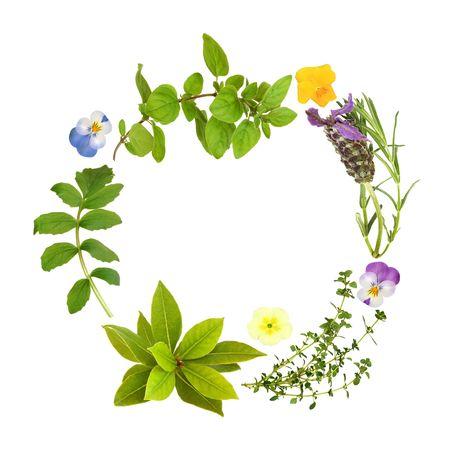 homeopatia: Guirnalda de hojas de hierba de lavanda, Bah�a, or�gano, tomillo de lim�n y valeriana, con flores de primavera y viola, sobre fondo blanco.