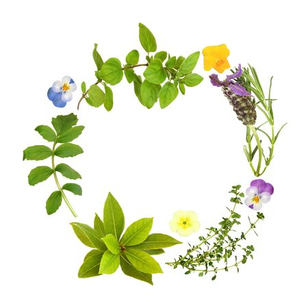homeopathic: Herb leaf garland of lavender, bay, oregano, lemon thyme and valerian, with primrose and viola flowers, over white background.
