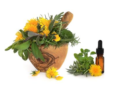 Wild dandelion and gorse flowers with sage, rosemary and lemon balm herbs, in an olive wood mortar with pestle and aromatherapy essential oil glass bottle, over white background. Stock Photo - 5958010