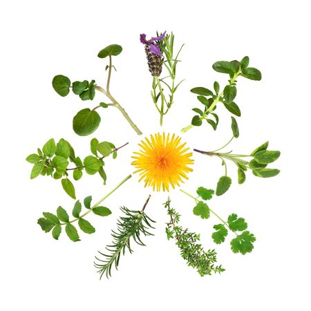 Herb leaf selection in abstract circular design with a wild dandelion flower in the center photo