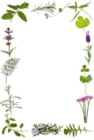 plantas medicinales: Hierba flores y hojas ramita abstracta frontera, sobre fondo blanco.