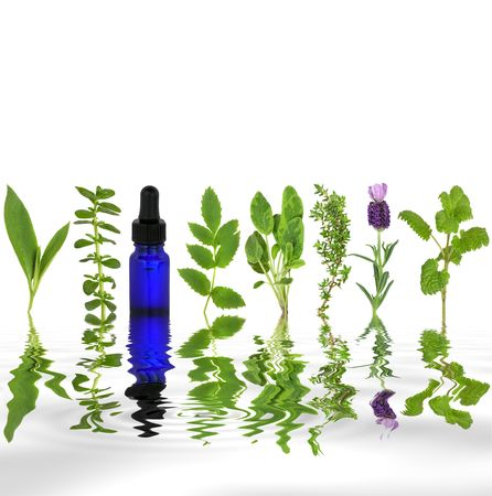 homeopathic: Herb leaf selection of comfrey, peppermint, valerian, sage, thyme, lavender and lemon balm with an aromatherapy essential oil glass dropper bottle with reflection in rippled grey water, over white background.