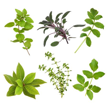 Herb leaf selection of oregano, sage, valerian, bay, thyme and valerian over white background.