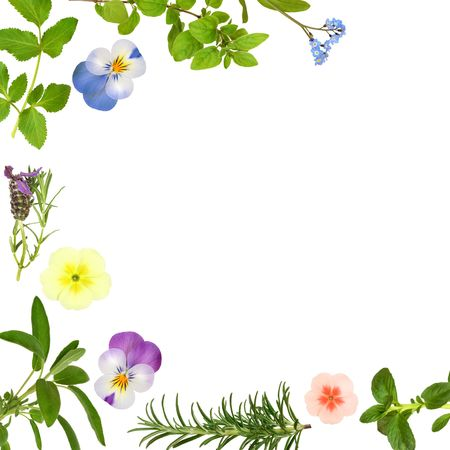 Abstract spring flower border with herb leaf sprigs, over white background. photo