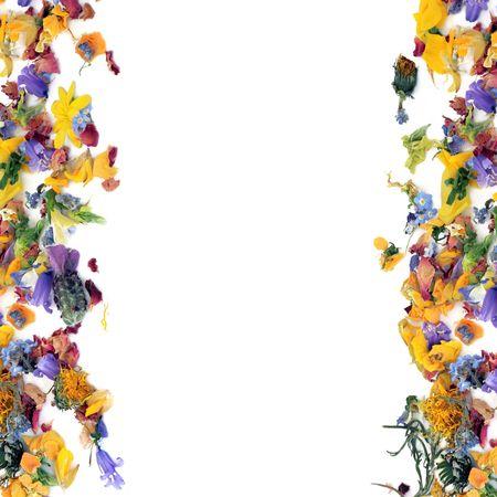 flores secas: Flores y hierba borde de hoja en dise�o abstracto sobre fondo blanco.  Foto de archivo