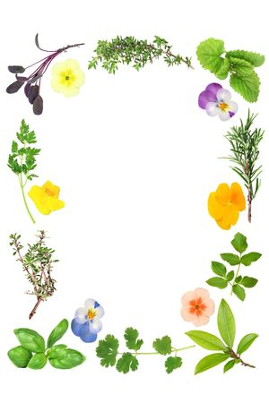 violets: Flowers and herb leaf selection forming an abstract border, over white background. Stock Photo
