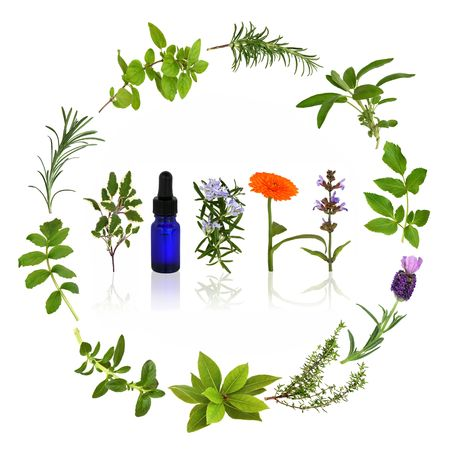 Medicinal and culinary herb leaves and flowers  in a circular design with an aromatherapy essential oil glass bottle, over white background.