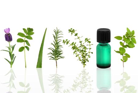 medicinal: Herb leaf selection of lavender, valerian, aloe vera, rosemary, lemon thyme and marjoram with an aromatherapy essential oil glass dropper bottle, over white background.