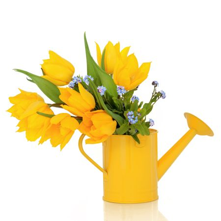 Tulip and forget me knot flowers in a yellow watering can, isolated over white background. photo