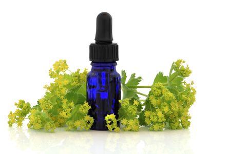 alchemilla: Ladys manto di erbe e fiori con bottiglia di vetro con olio essenziale di aromaterapia, su sfondo bianco. Alchemilla vulgaris mollis.