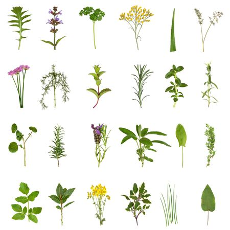 Large medicinal and culinary herb flower and leaf selection isolated over white background.