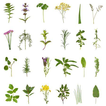 erbe aromatiche: Selezione di fiori e delle foglie grandi erbe medicinali e culinaria isolata su sfondo bianco.