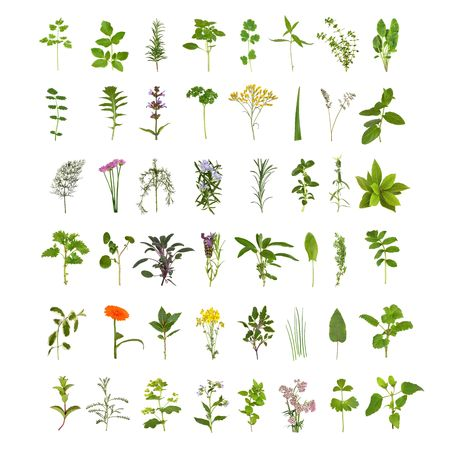 Large medicinal and culinary herb flower and leaf collection, isolated over white background. Forty eight herbs. photo